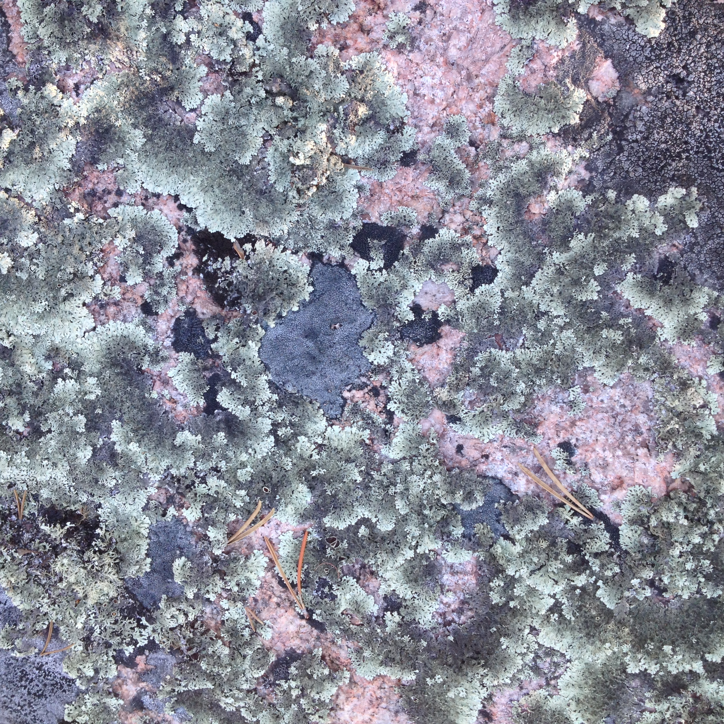Lichens, Northwest Territories