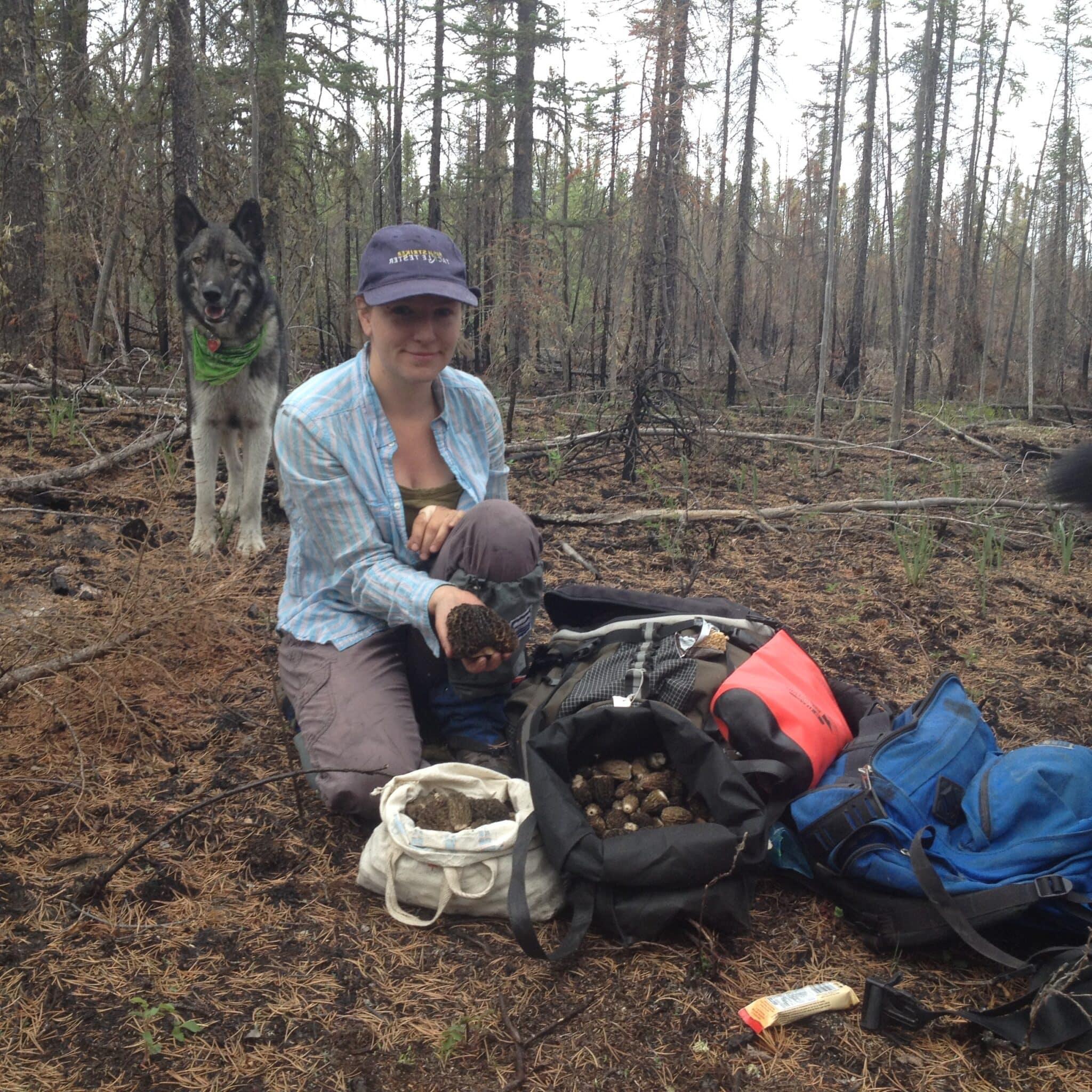 Morel Mushroom Harvest, 2015 Northwest Territories