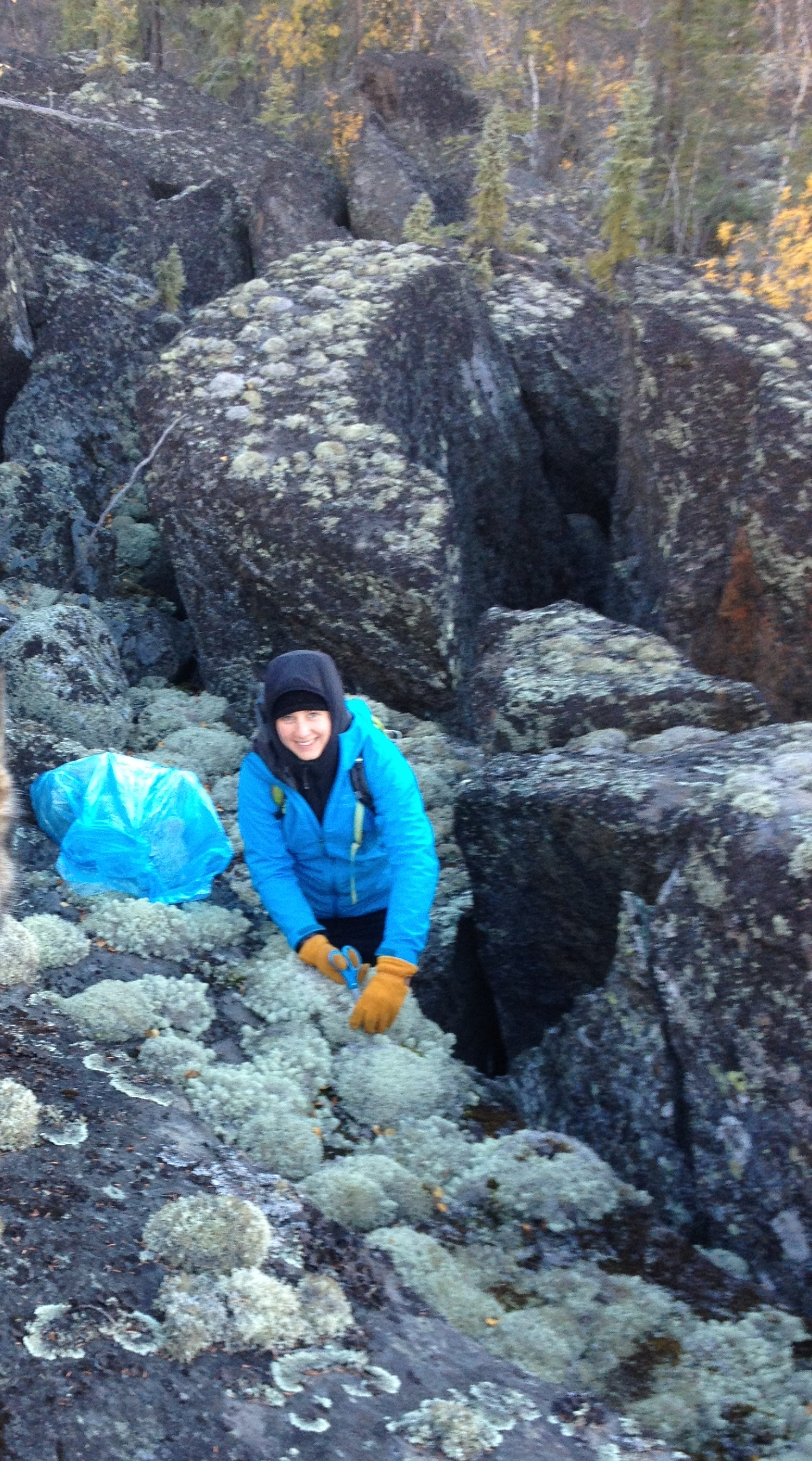 Harvesting Lichens On A Chilly Fall Afternoon, Northwest Territories