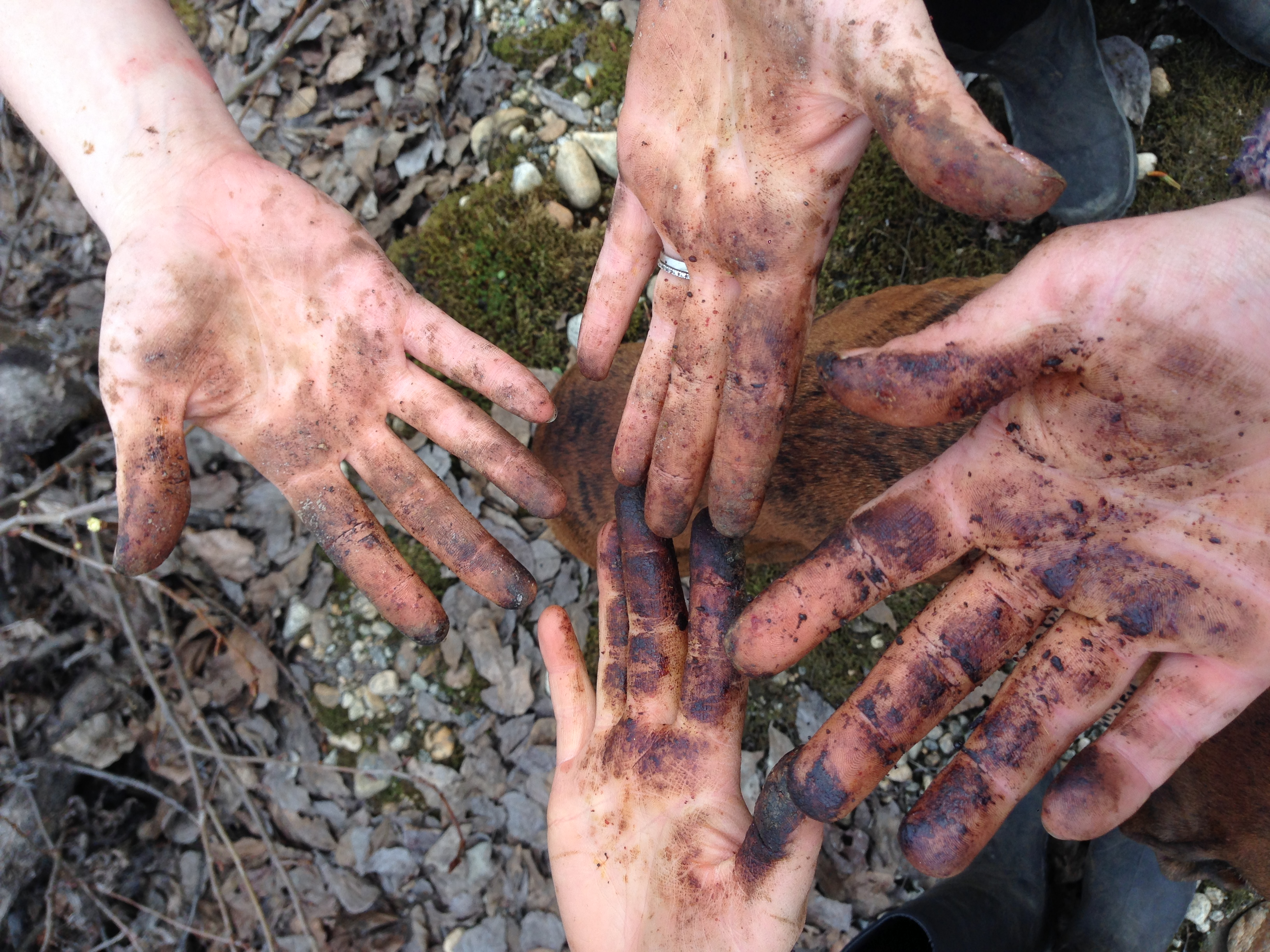 Four Happy Hands After An Afternoon Of Collecting Sticky Cottonwood Buds For The Balm Of Gilead Salve