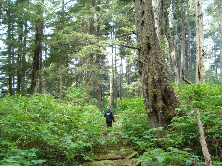 Coastal Island, Northwestern British Columbia