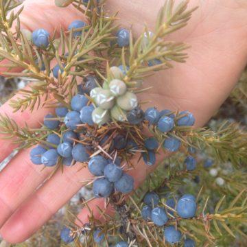 Bulk Herbs, Mushrooms, Berries